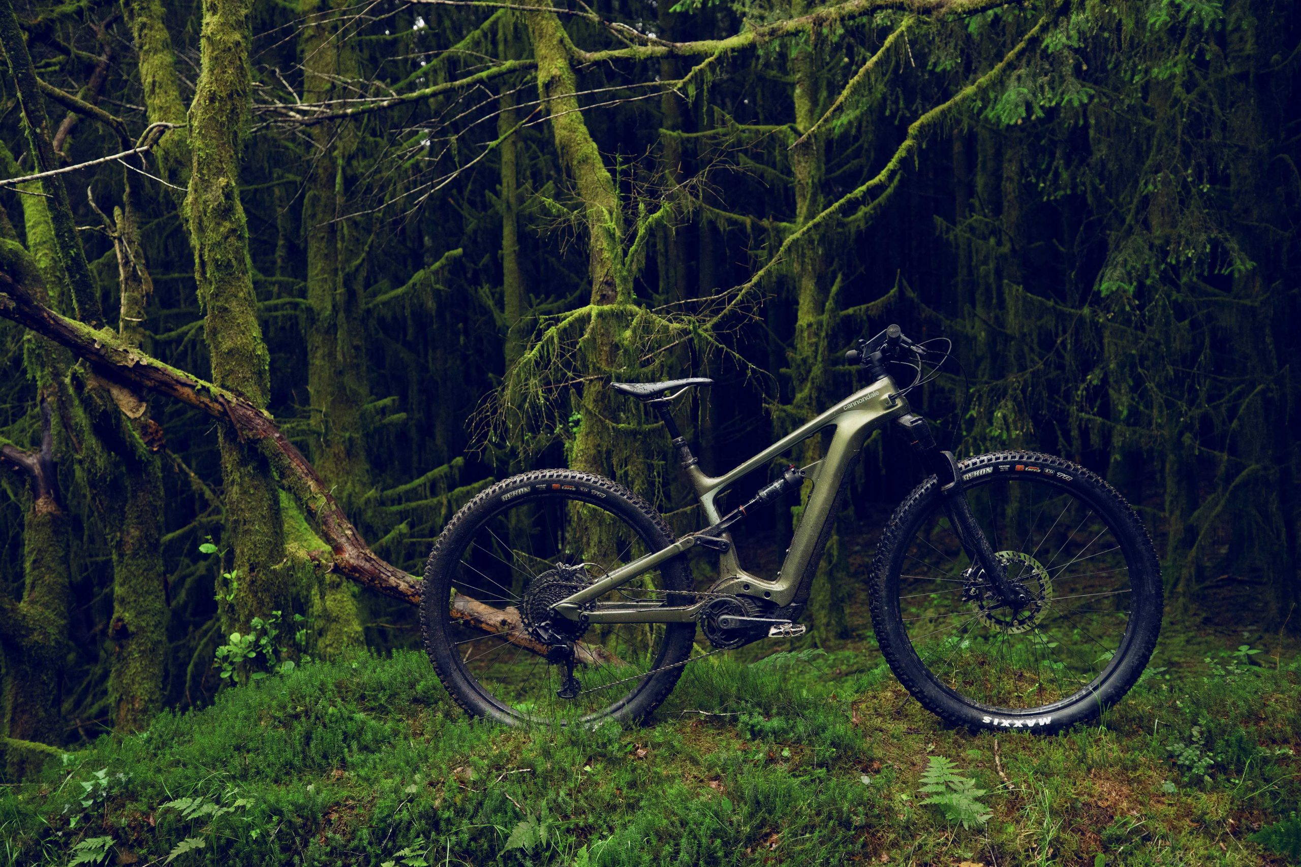 Bike standing in the forest